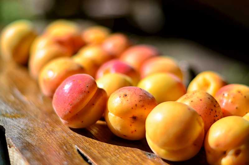 In Season Ripe Apricots