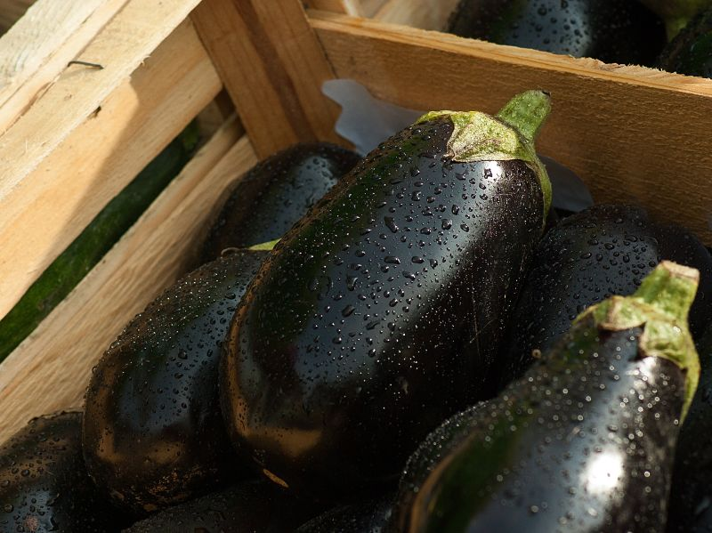 In Season Ripe Aubergines